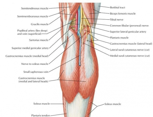 Nerve Entrapment and the Popliteal Fossa